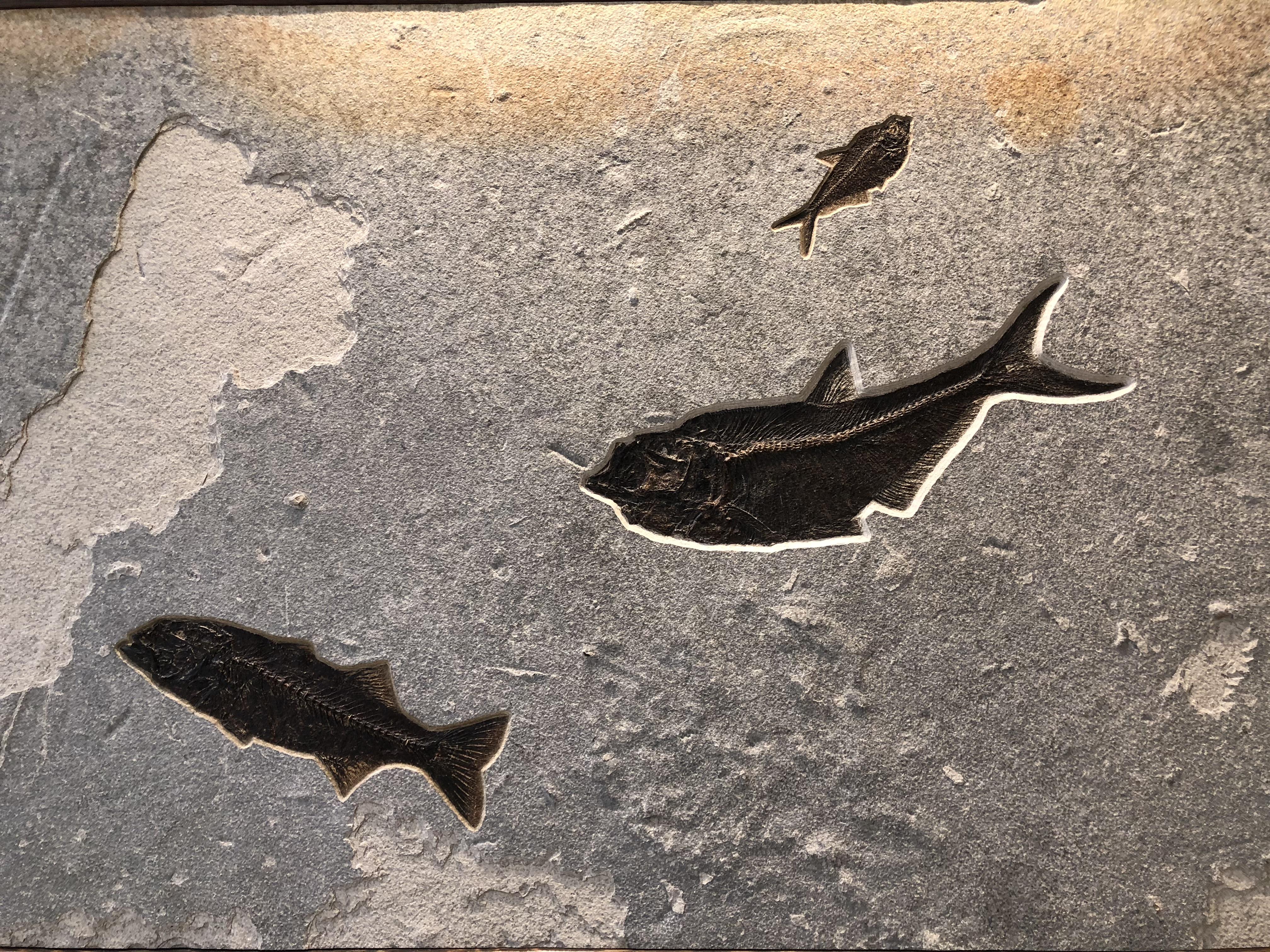 Cute fossil fish