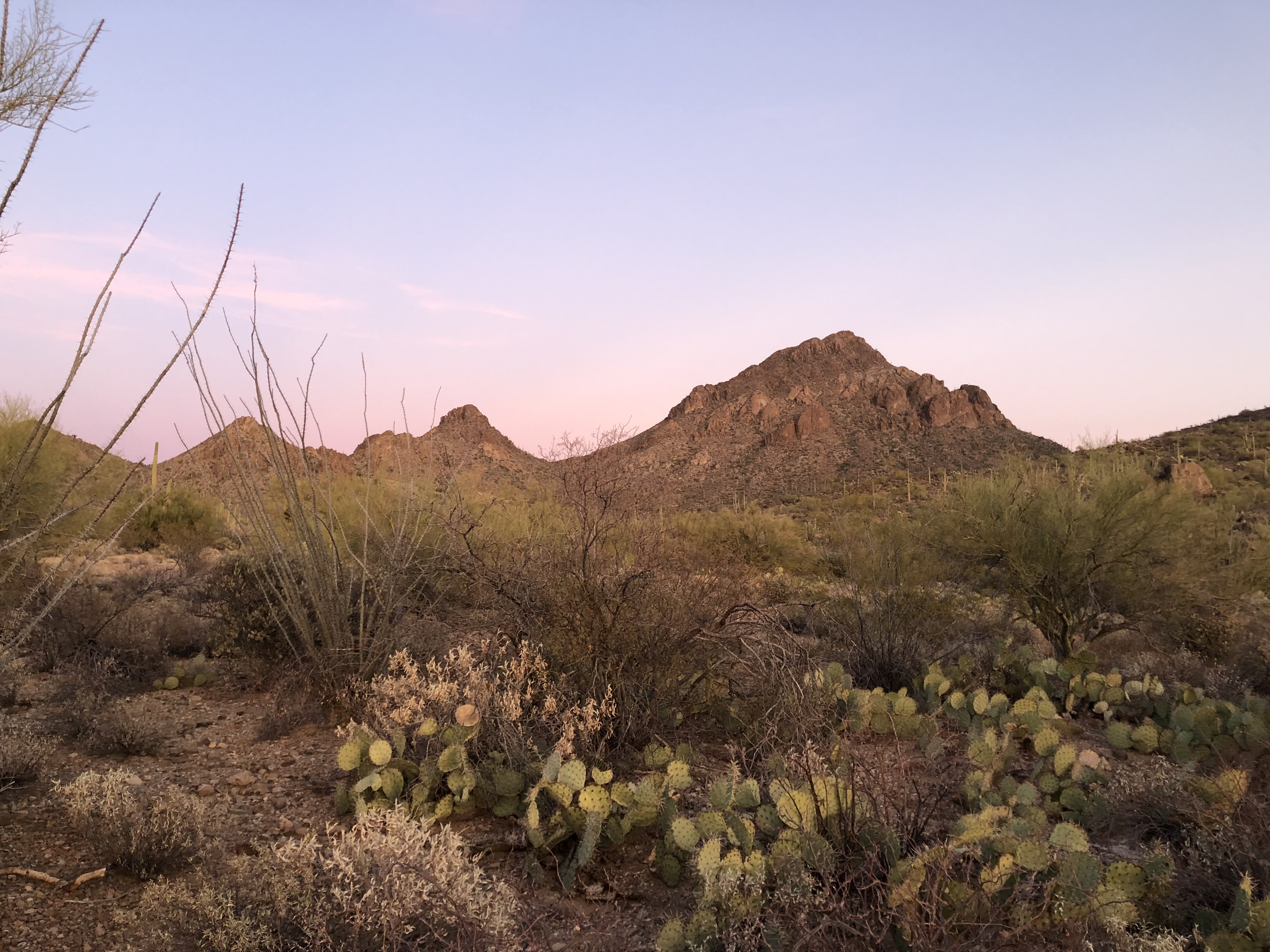 Tucson desert scene