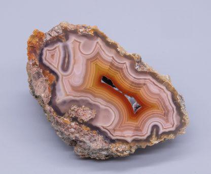 Laguna Agate nodule - polished half