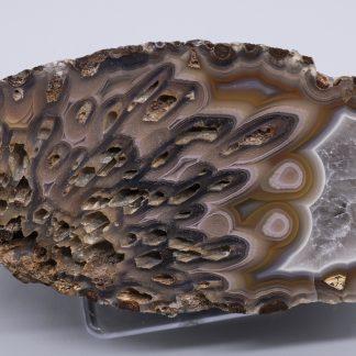 Coyamito Pseudomorph Agate